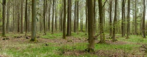 20200427-Skoven ved Harløse-009
